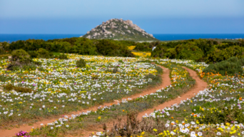 Where to view the Cape's spring flowers