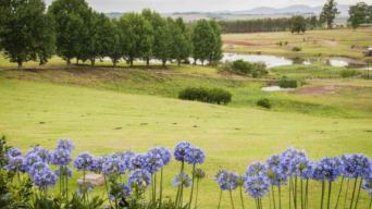 Where to go in South Africa during spring